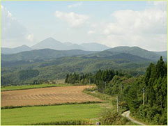 根菜類の産地、津軽南部地域