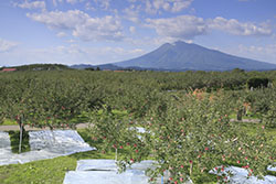 青森県から全国へ 津軽南部特産の「美味いもの」をお届けいたします。